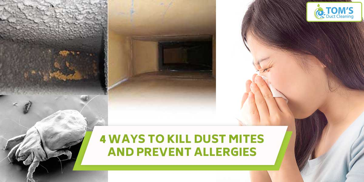 4 Ways To Kill Dust Mites And Prevent Allergies